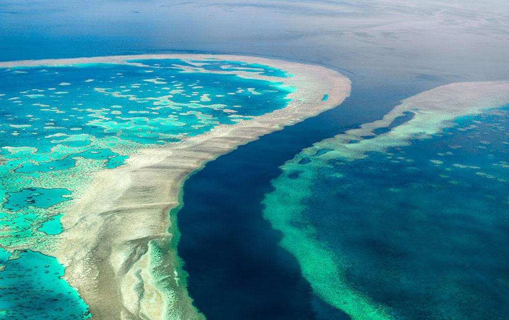 Reef - Grande Barriera Corallina Australiana