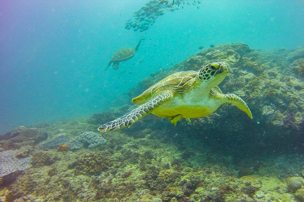 Reef Kenya