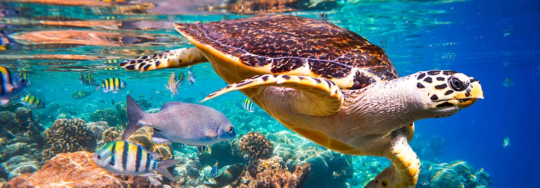 Reef Maldive
