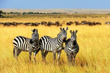 Viaggi Tanzania