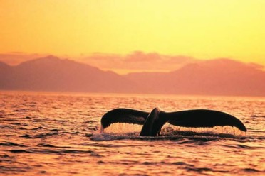 Viaggi Tra orsi e balene – Classic