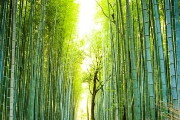 Viaggi Splendido Giappone