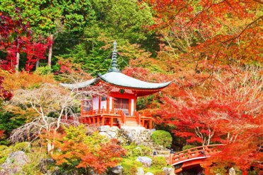 Viaggi Sogno giapponese