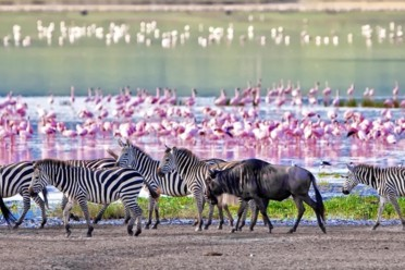 Viaggi Tanzania Wildlife
