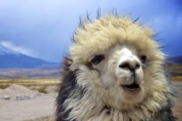 Viaggi Cile Express e Rapa Nui