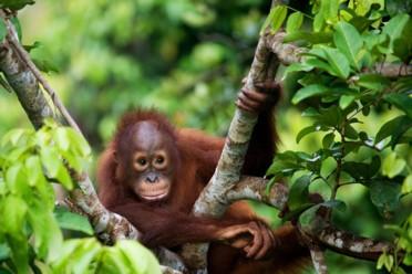 Viaggi Minitour Orang Utan e River Safari