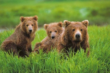 Viaggi Alaska, avvistamento orsi