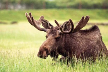 Viaggi Scopri Alaska in auto