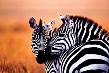 Viaggi Mini Safari and Dongwe Club