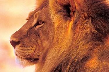 Viaggi Tour e Esclusivi safari in Botswana e Zimbabwe