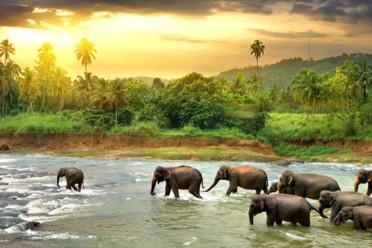 Viaggi Alla scoperta dello Sri Lanka