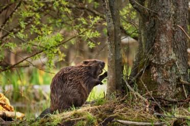 Viaggi Canada, natura e relax