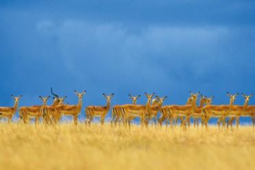Viaggi Orizzonti d'Africa