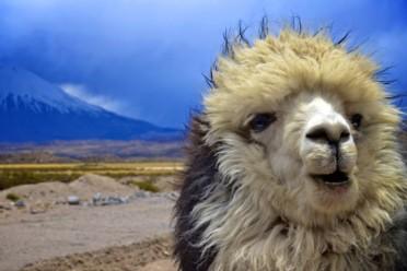 Viaggi Panorami patagonici: Argentina e Cile