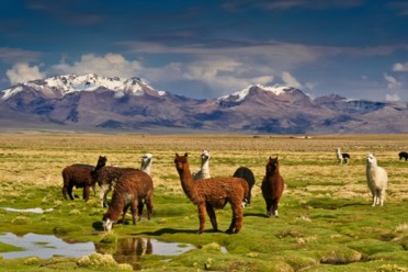Viaggi Sinfonia sudamericana: Argentina, Bolivia e Cile