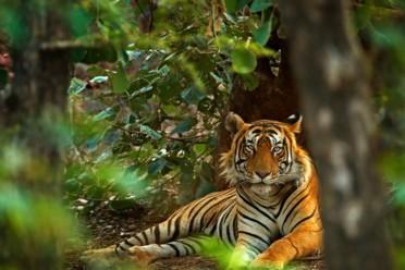 Viaggi Nel paese della tigre