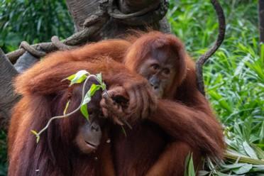 Viaggi Best of Borneo
